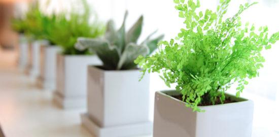枯れない観葉植物